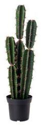 Faux Cactus