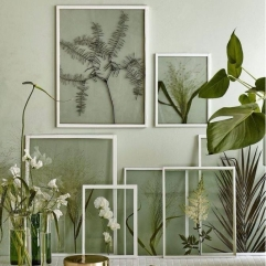 Collection of See-through Frames