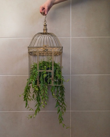 Vintage Bird Cage & Creeper